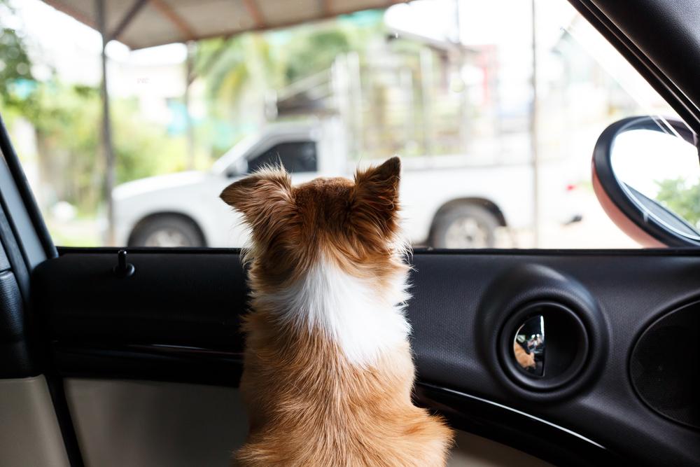 車内でのペットの放置も危険!! 季節に限らず、置き去りはやめましょう