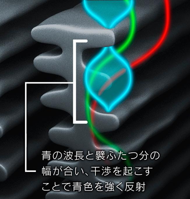 モルフォ蝶の羽の構造。三原色のなかで「青」だけを強く反射する形状のため、人間には青く見える